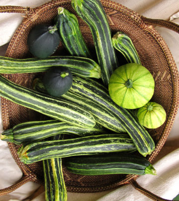 Summer squash - Growing veggies from seed