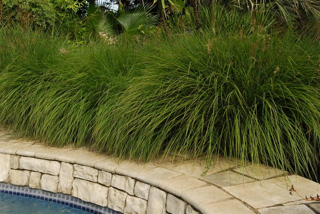 Ideas for landscaping with grasses sa garden and home for Mounding grass