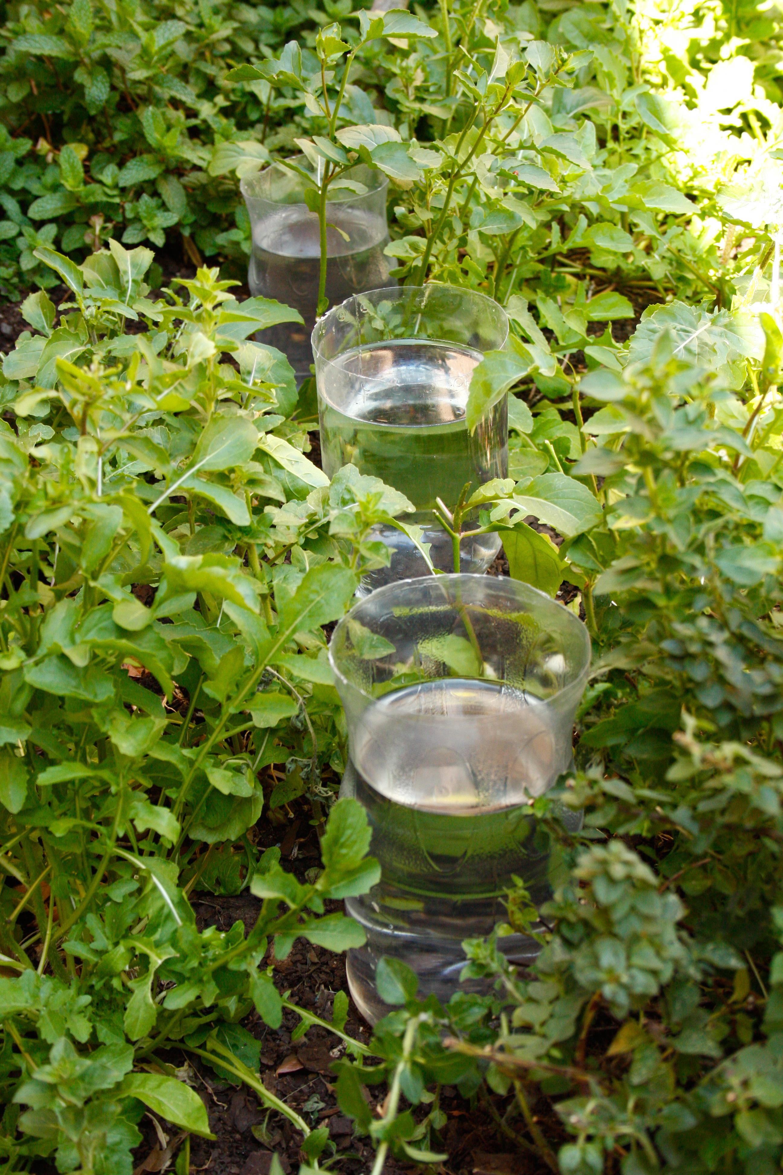 Make Diy Drip Irrigation System Using Plastic Bottles