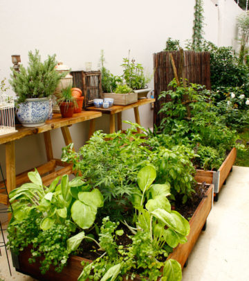 Container veggies - growing veggies in containers