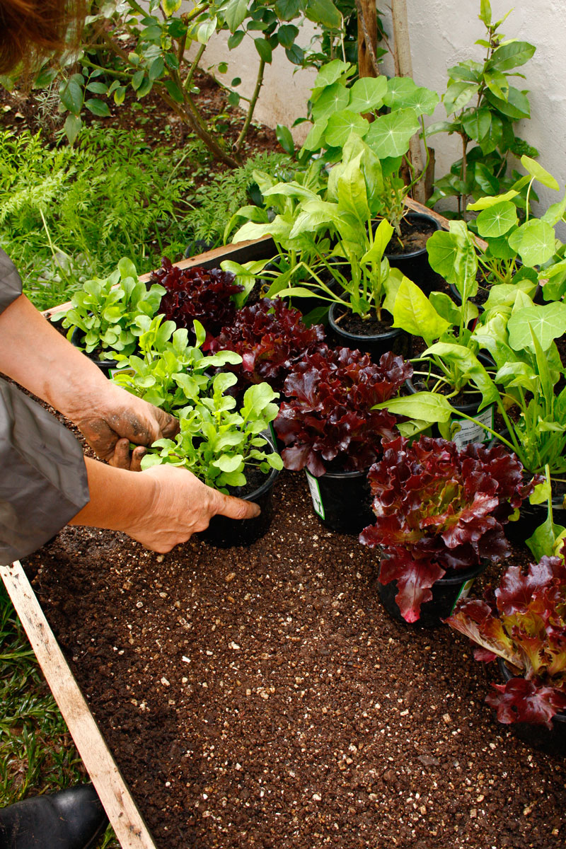 Plant them up - growing veggies in containers