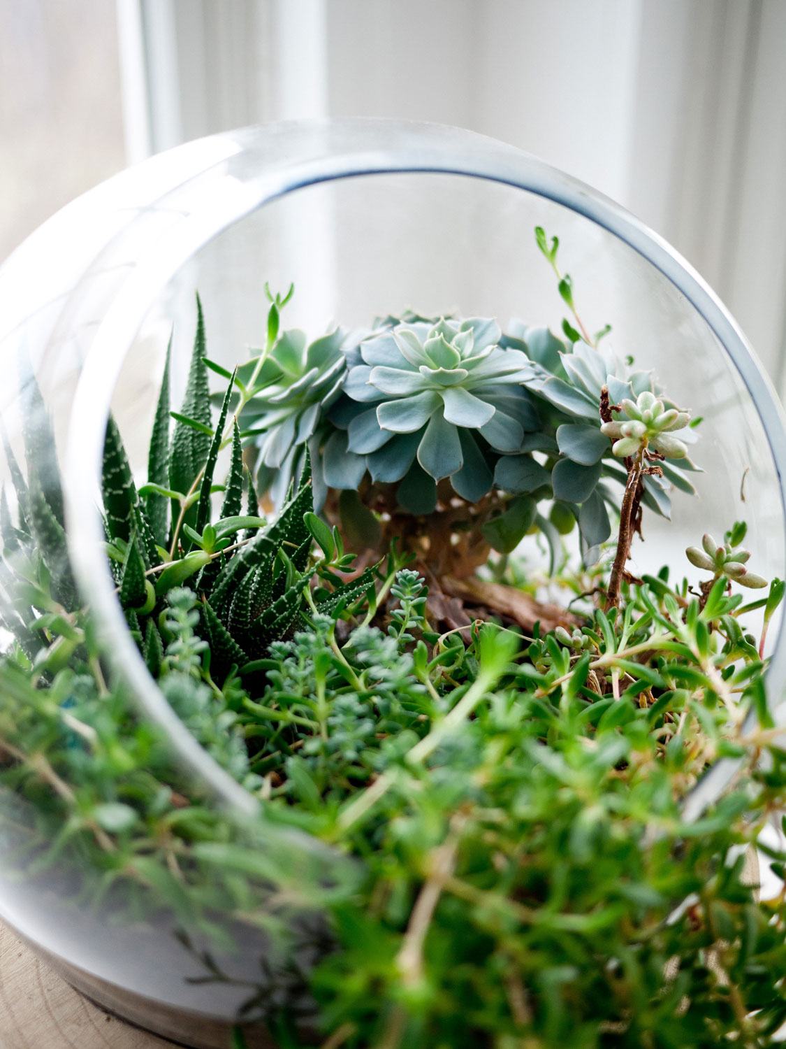 Creating A Mini Terrarium Sa Garden And Home