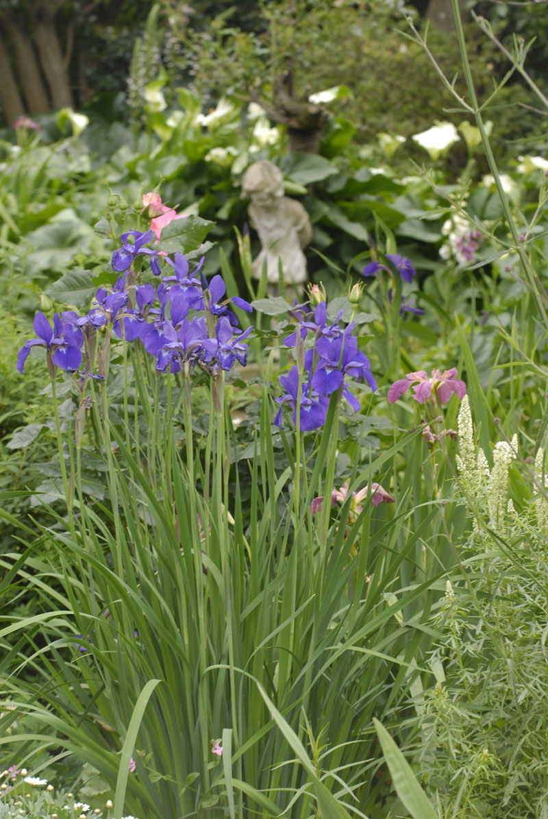 Growing Irises The Ultimate Guide Sa Garden And Home