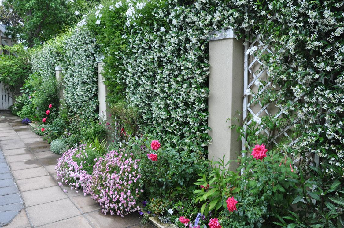 Soften boundary walls - garden quick fixes