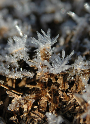 Protecting Plants Against Frost Sa Garden And Home