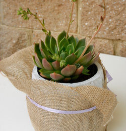 Gifts for gardeners: containers