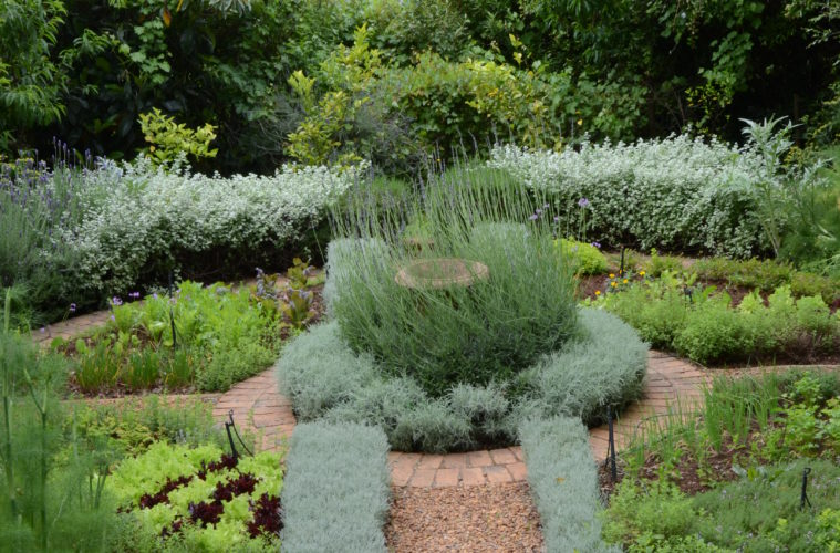 7 Steps To Planting A Herb Garden