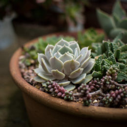 7 Succulents anyone can grow