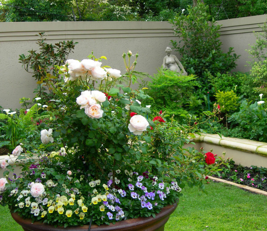 Mulching Roses Bushes: Companion Planting In The Rose Garden