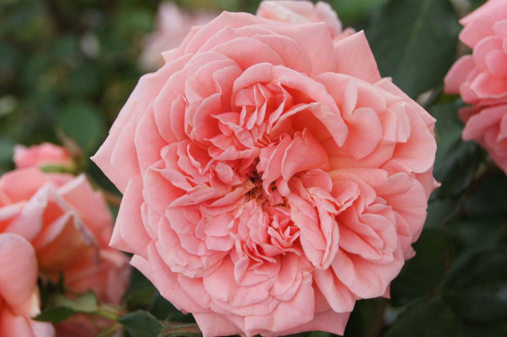 Flower Power Panarosa