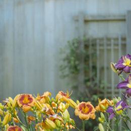 The ultimate gardening quiz