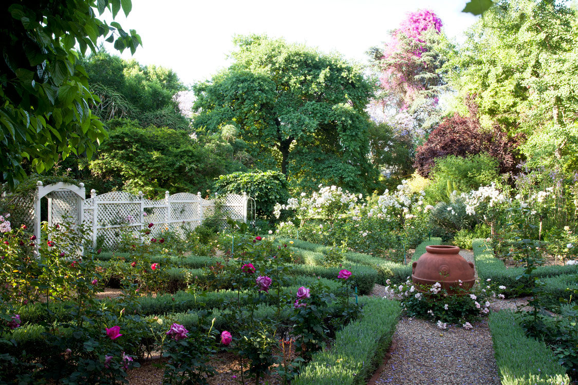 How to plant a rose garden focal point