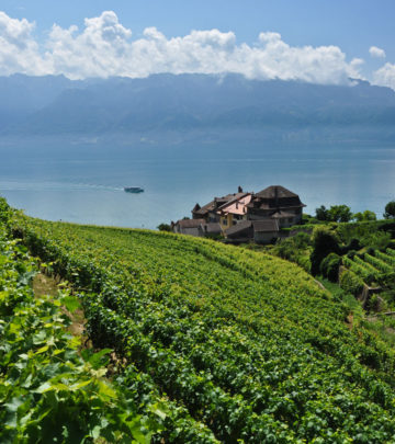The vineyards of Lavaux tumble down to Lake Geneva.