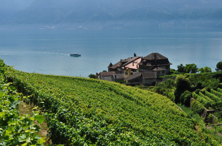 The vineyards of Lavaux tumble down to Lake Geneva.