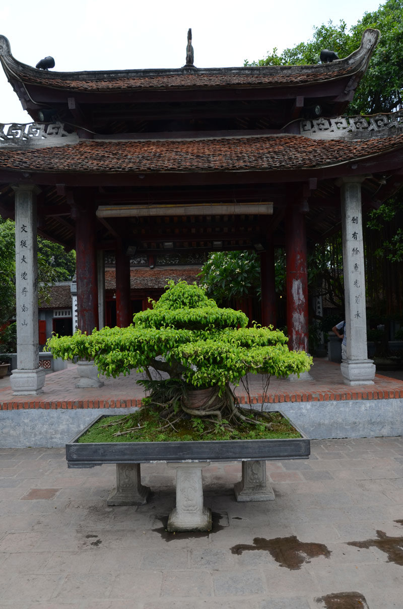 VENERABLE BONSAI TREES CREATED FROM FIG TREES, FICUS SPP. OR INDIGENOUS YELLOW WOODS ARE FOUND AT MOST TEMPLES.