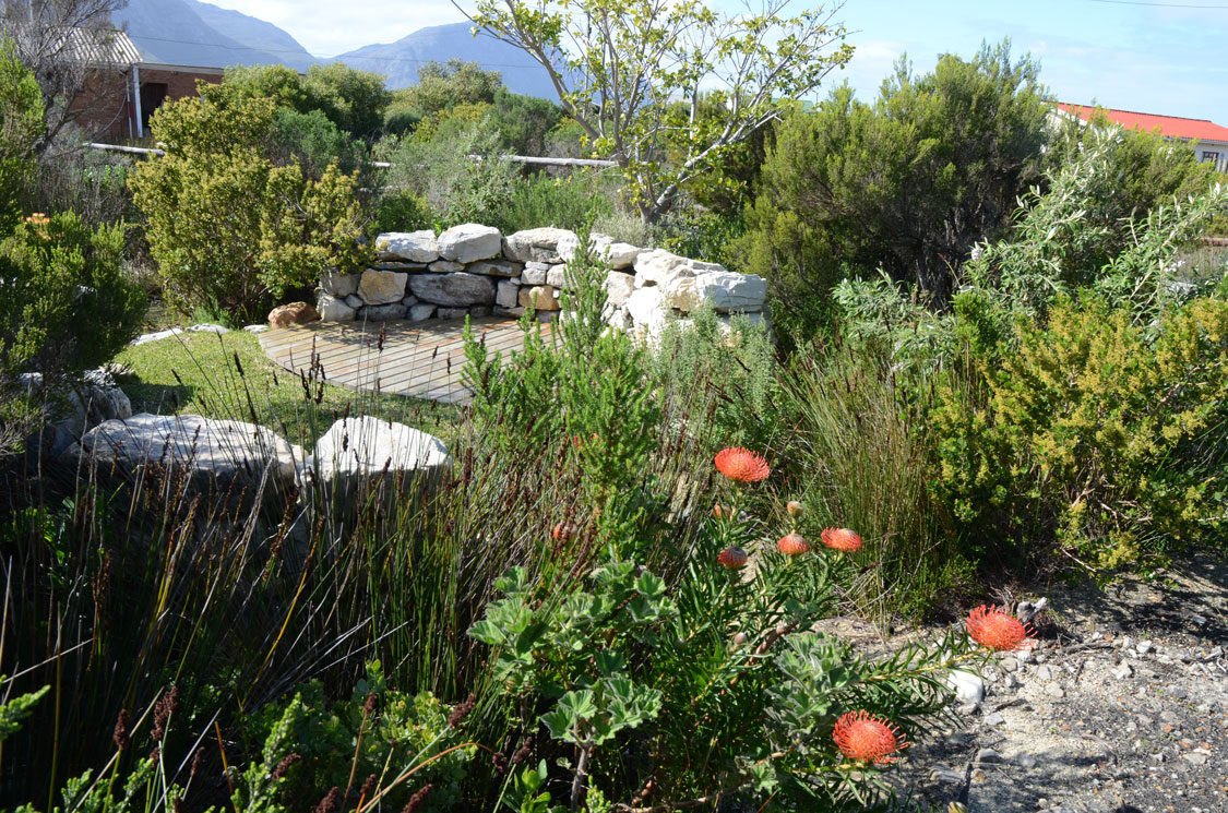 Gardening in drought conditions an intro sa garden and home for Garden designs in south africa