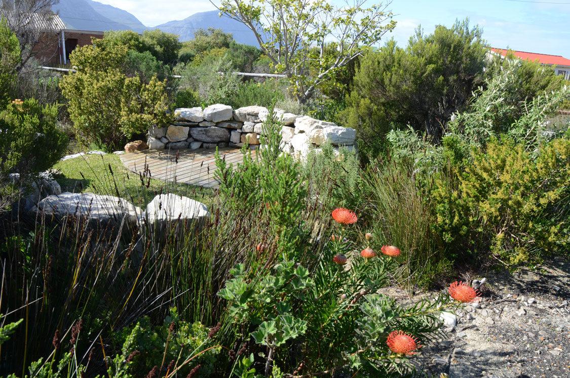 Gardening in drought conditions an intro sa garden and home for South african garden designs