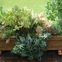 3 Container ideas for succulents