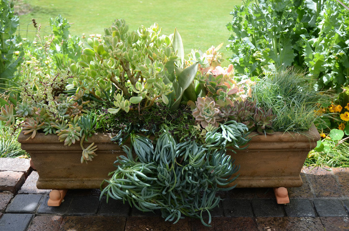 3 Container ideas for succulents | SA Garden and Home