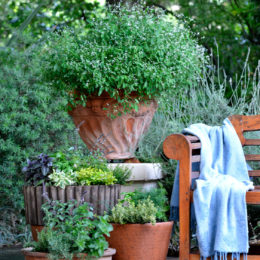 Small garden ideas: growing herbs in pots