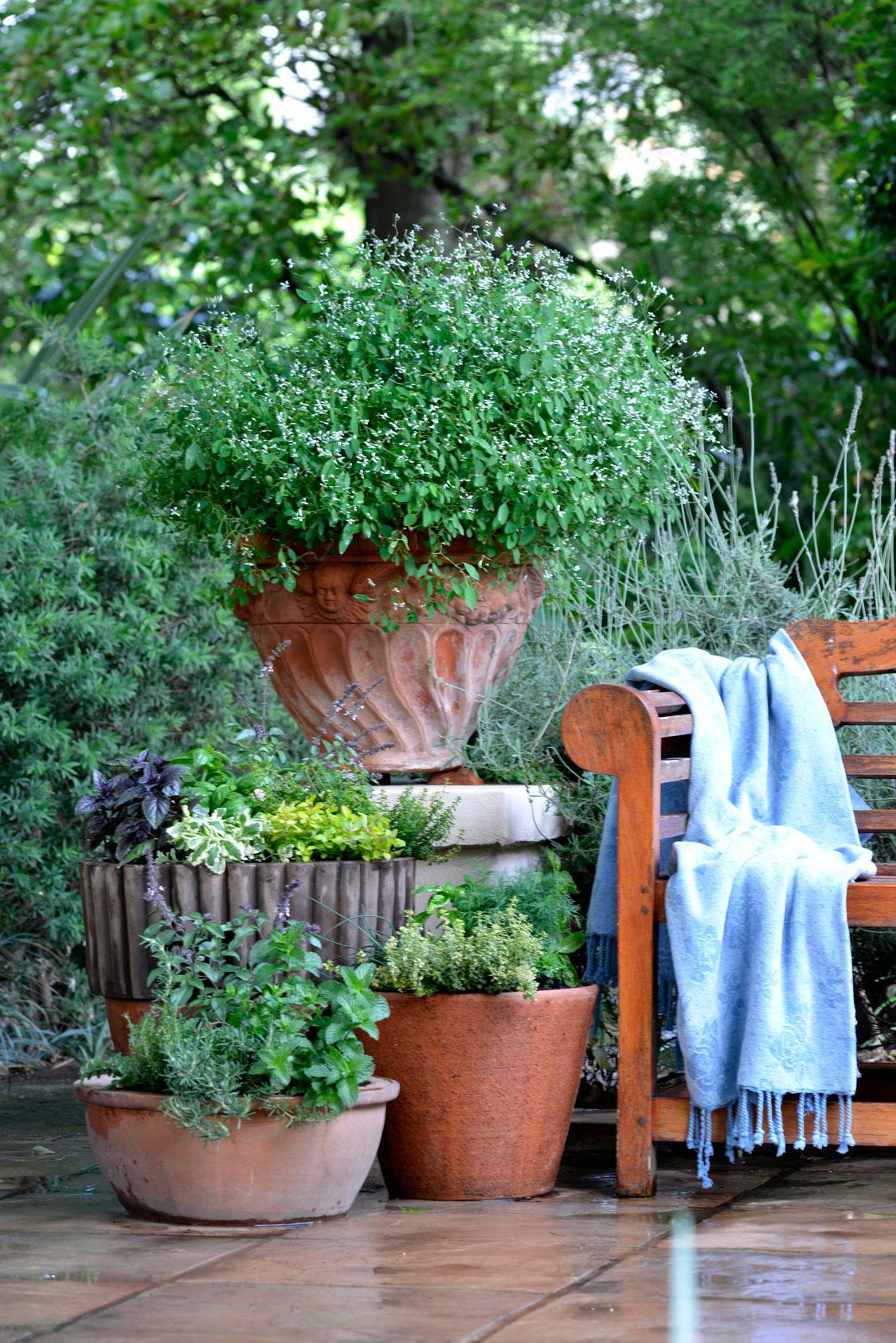 Tiny Home Designs: Small Garden Ideas: Growing Herbs In Pots