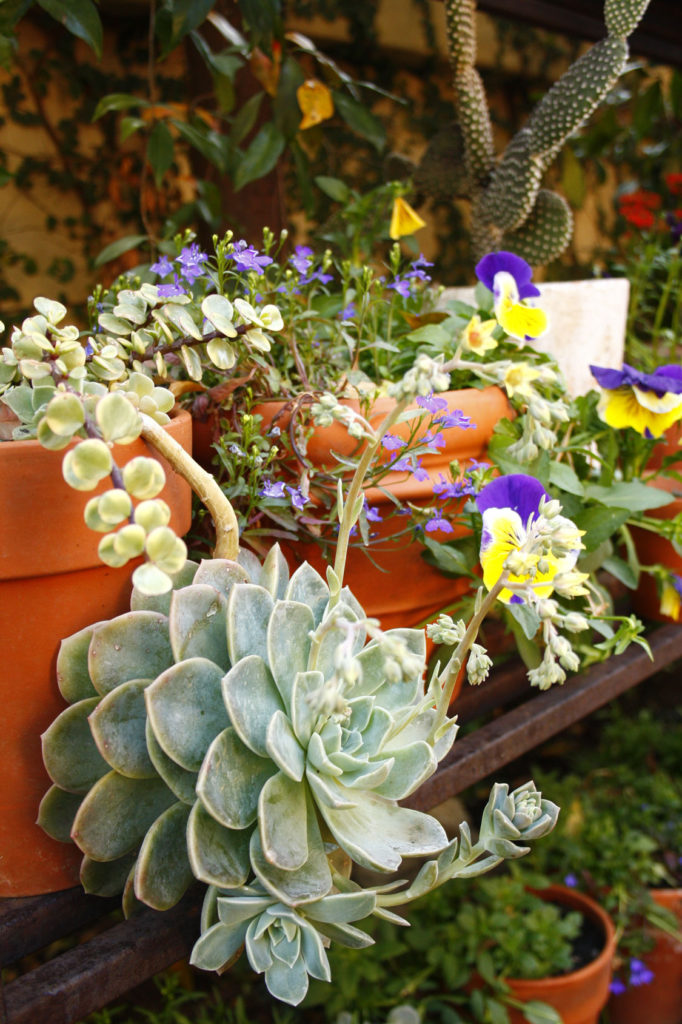 containers -- low maintenance gardening tips -- Garden and Home