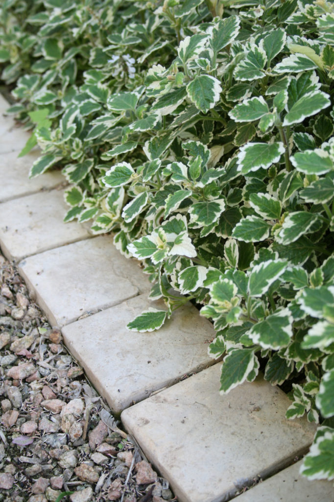 waterwise -- low maintenance gardening tips -- Garden and Home