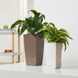 Win 1 of 3 Lechuza Self Watering Maxi- and Mini- Cubi Combo Planters worth R570 each