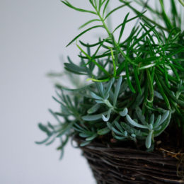 How to best care for indoor plants