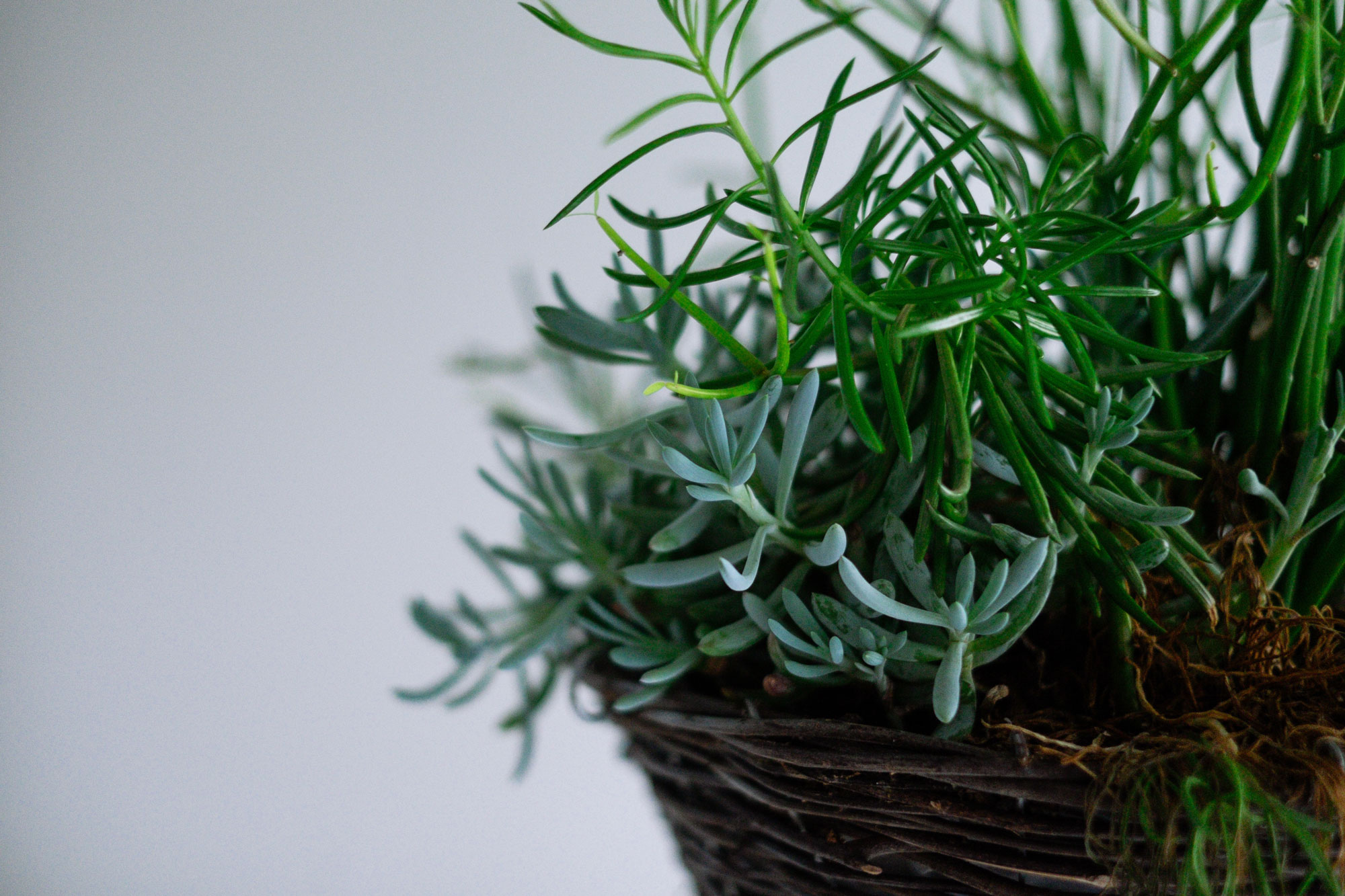 How To Care For Indoor Plants Sa Garden And Home