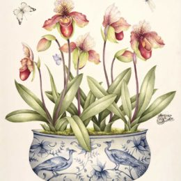 Botanical art exhibition | 8-13 November