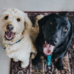 We're giving away 3 NexGard® doggy hampers