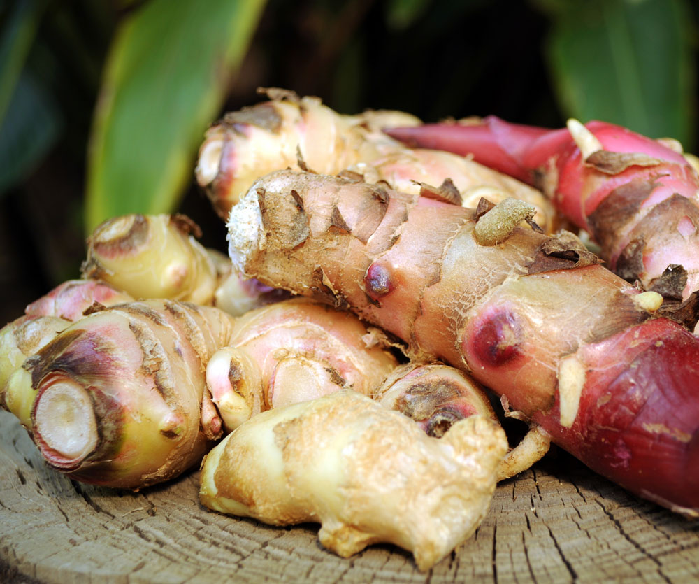 how-to-grow-body-cleansing-herbs-ginger