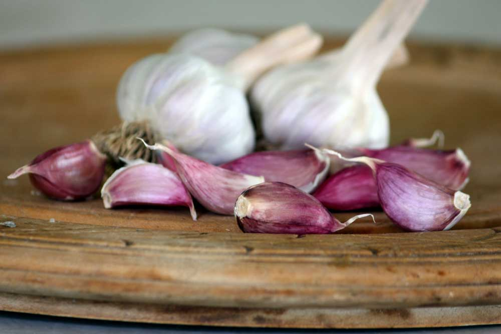 Growing Garlic: Vegetable Gardening