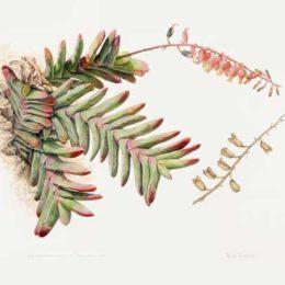 Botanical Art Worldwide Exhibition