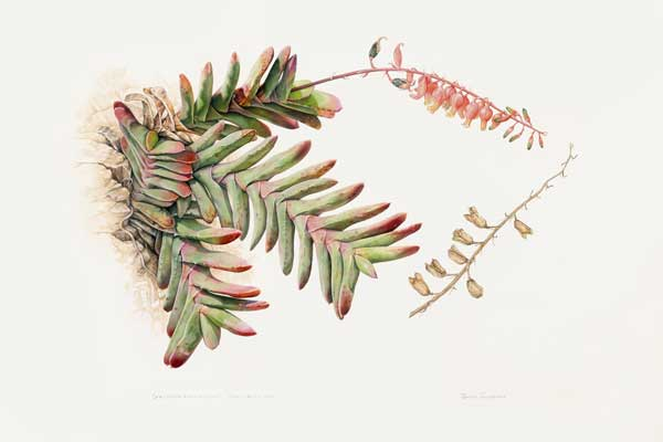 Botanical Art Worldwide Exhibition