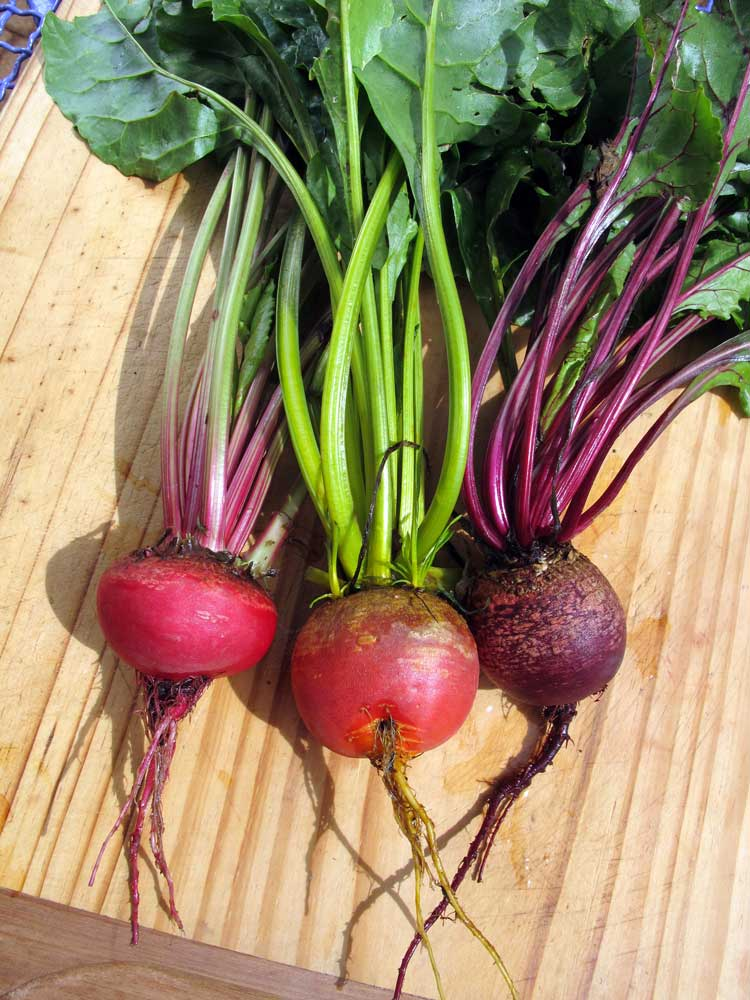 growing beetroot - 5