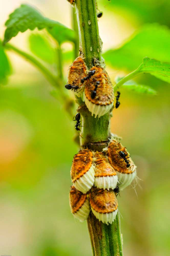 eco-friendly pest control 2