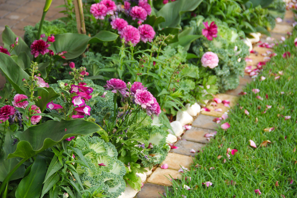 ornamental kale and rananculi + winter gardening guide