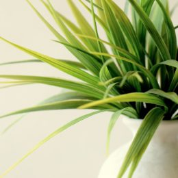 How to keep your indoor plants alive during winter