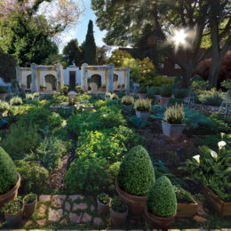 Gardens of the golden city: Beechwood Open Garden