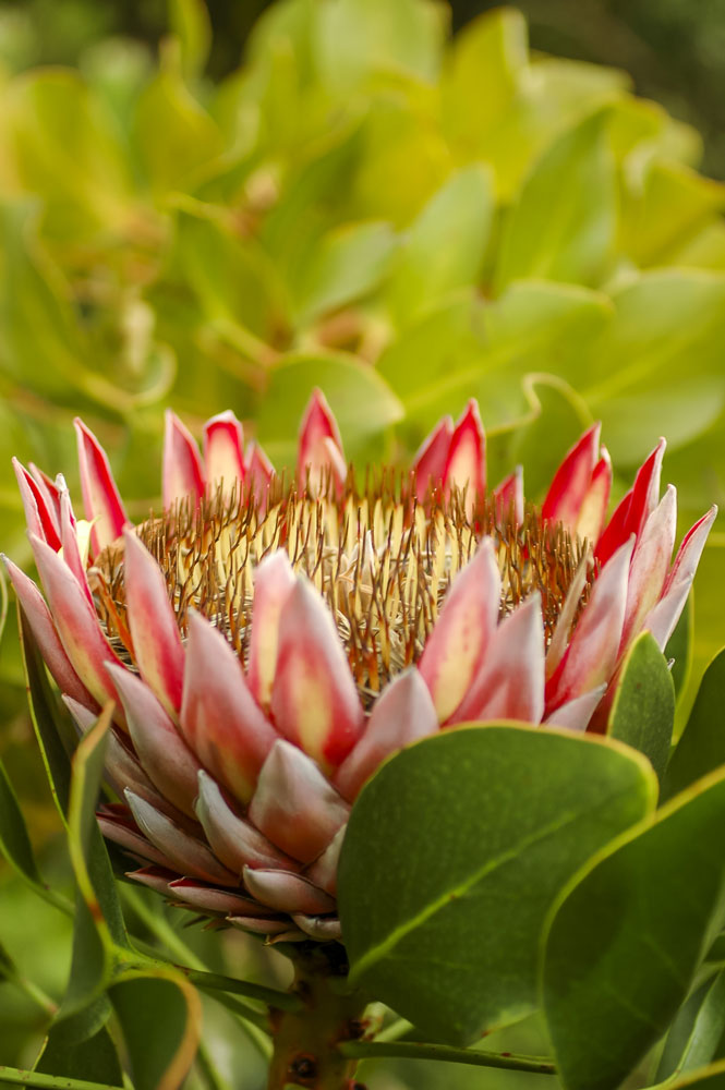 SA Garden and Home - Gardening guide