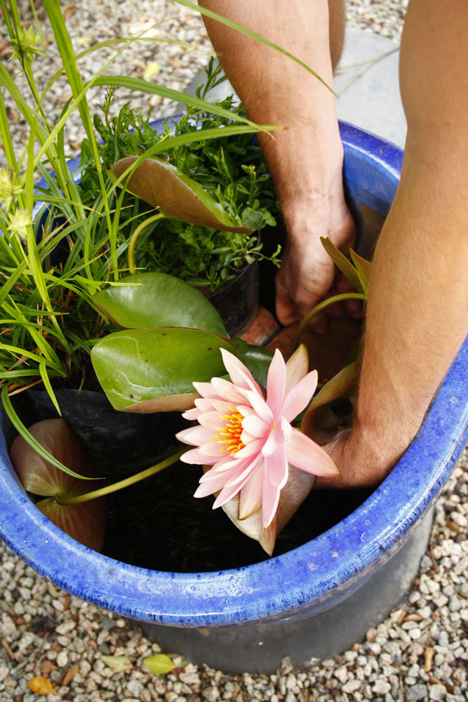 make a water garden in a container