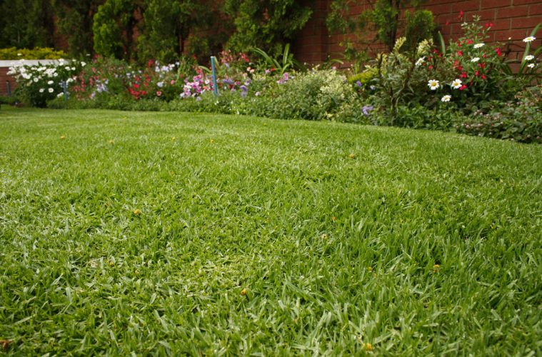 water-wise lawns